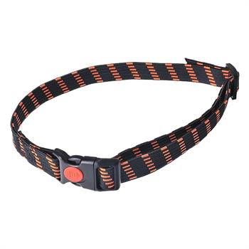 24493-elastic-collar-25-mm-wide-orange.jpg