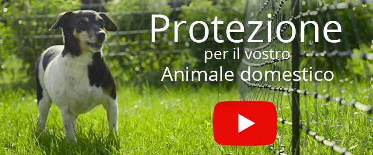 Recinto Elettrico Per Cani.Recinti Per Cani