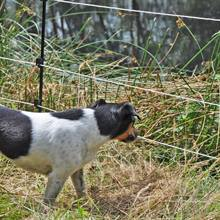 Pali per recinto cane