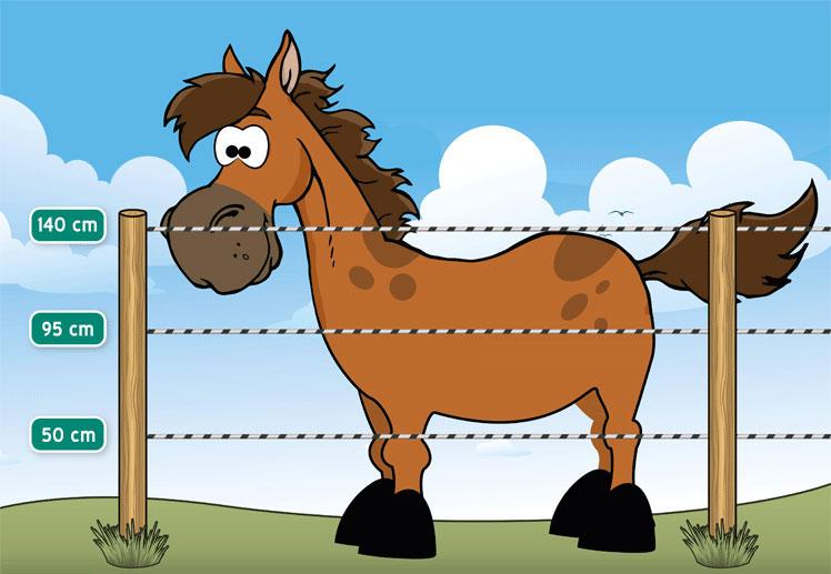 Recinto per Cavalli