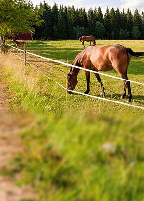 Recinto Elettrico Per Cavalli.Cavalli