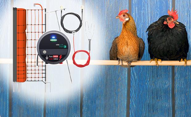 Set completi per il pollame